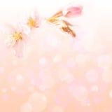Fondo del fiore della primavera Immagine Stock Libera da Diritti