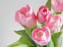 Fondo del fiore, sfuocatura Cartolina d'auguri Mazzo dei tulipani rosa in un vaso Fotografia Stock