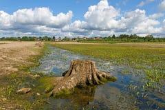 Fondo del fiume Fotografie Stock