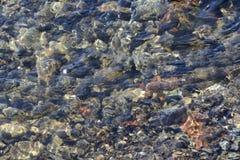 Fondo del fiume attraverso acqua trasparente immagine stock libera da diritti