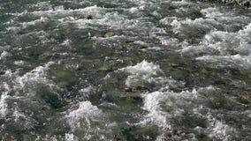 Fondo del fiume dell'acqua vicino su delle pietre in acqua di fiume trasparente fresca pura della montagna, vista da sopra Le pie video d archivio