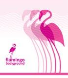 Fondo del flamenco Foto de archivo libre de regalías