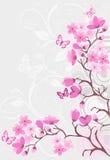 Fondo del flor de cereza Imágenes de archivo libres de regalías