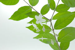 Fondo del flor de la primavera Imagen de archivo