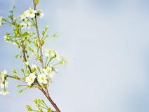 Fondo del flor del resorte Fotos de archivo