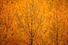 Fondo del follaje de otoño Imagenes de archivo