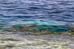 Fondo del fondo dell'oceano in acque verdi tropicali Fotografia Stock Libera da Diritti