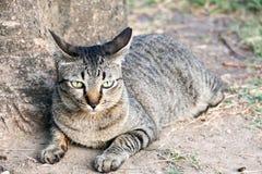 Fondo 284 del gato Fotografía de archivo libre de regalías
