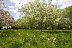 Fondo del giardino della primavera Fotografie Stock