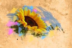 Fondo del girasol Imagen de archivo