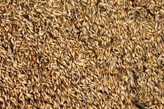 Fondo del grano de avena Fotos de archivo