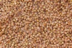 Fondo del grano saraceno Fotografie Stock