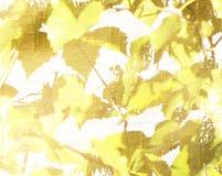 Fondo del Grunge con las hojas del amarillo y del marrón foto de archivo libre de regalías