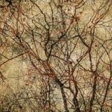Fondo del Grunge con las siluetas del árbol Imagen de archivo libre de regalías