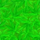 Fondo del grunge de la marijuana Fotos de archivo
