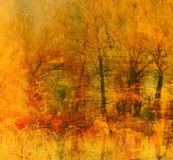 Fondo del grunge del arte con los árboles forestales Imagen de archivo