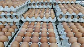 Fondo del gruppo delle uova fotografia stock libera da diritti
