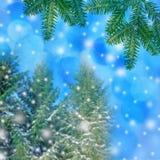 fondo del invierno - árboles cubiertos con nieve Fotografía de archivo libre de regalías