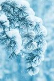 Fondo del invierno Imagenes de archivo