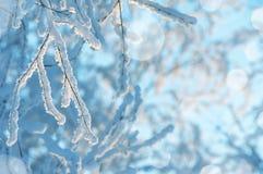 Fondo del invierno con la rama de árbol en escarcha Foto de archivo libre de regalías