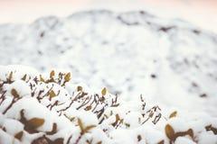 Fondo del invierno con las ramas de la nieve fotografía de archivo libre de regalías