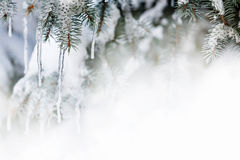 Fondo del invierno con los carámbanos en árbol de abeto Foto de archivo libre de regalías
