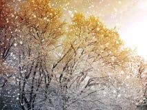 Fondo del invierno con nieve que cae Imagen de archivo