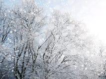 Fondo del invierno con nieve que cae Imagenes de archivo