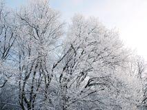 Fondo del invierno con nieve que cae Fotos de archivo