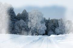 Fondo del invierno Fondo de la Navidad o del Año Nuevo Invierno delantero Imagen de archivo