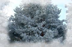 Fondo del invierno Fondo de la Navidad o del Año Nuevo Invierno delantero Fotografía de archivo libre de regalías