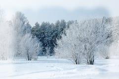 Fondo del invierno Fondo de la Navidad o del Año Nuevo Invierno delantero Foto de archivo