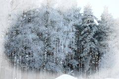 Fondo del invierno Fondo de la Navidad o del Año Nuevo Invierno delantero Imagenes de archivo