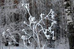 Fondo del invierno Fondo de la Navidad o del Año Nuevo Invierno delantero Imagen de archivo libre de regalías
