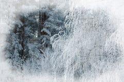 Fondo del invierno Fondo de la Navidad o del Año Nuevo Invierno delantero Fotos de archivo