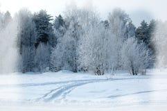 Fondo del invierno Fondo de la Navidad o del Año Nuevo Invierno delantero Fotos de archivo libres de regalías