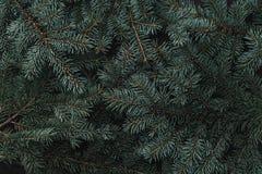 Fondo del invierno de las ramas del abeto Tarjeta de Navidad Visión superior Enhorabuena de Navidad fotografía de archivo libre de regalías