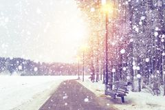 Fondo del invierno Nevadas en parque de Navidad en puesta del sol Copos de nieve faling en tema de la Navidad nevosa del bosque y fotografía de archivo libre de regalías