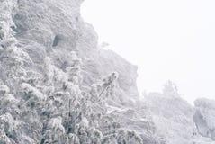 Fondo del invierno, paisaje - pino nevado delante de la roca de la escarcha fotografía de archivo