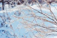 Fondo del invierno Ramas en helada y nieve Imagen de archivo