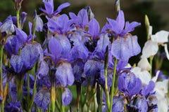 Fondo del iris Imágenes de archivo libres de regalías