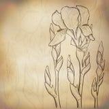 Fondo del iris del bosquejo Imágenes de archivo libres de regalías
