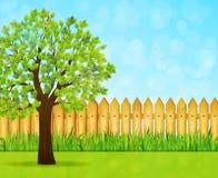 Fondo del jardín con el árbol verde y la cerca de madera Fotografía de archivo libre de regalías