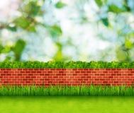 Fondo del jardín con la pared de ladrillo y la hierba verde Imagenes de archivo