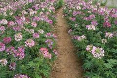Fondo del jardín de flores del primer Imagen de archivo