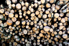 Fondo del legname immagini stock