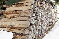 Fondo del legno di faggio in neve Fotografia Stock Libera da Diritti