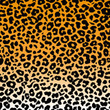 Fondo del leopardo Immagine Stock