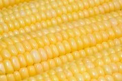 Fondo del maíz Fotos de archivo