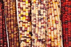 Fondo del maíz indio Fotografía de archivo